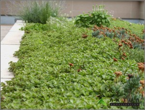 cubierta-vegetal-valencia