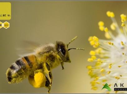 Proyecto actividad venta de miel, Segorbe, Castellón